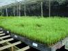 seedling-mix-uses